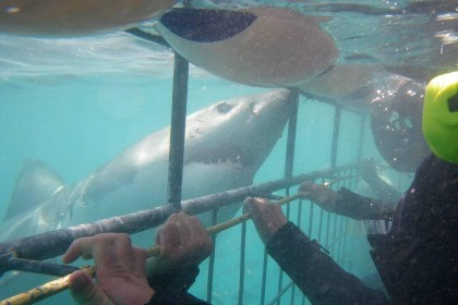 04a-shark-cage-diving